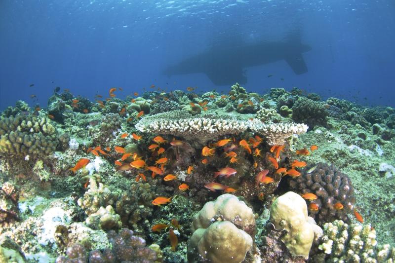 Aventure en mer rouge (Sudan inside) _dsc1210