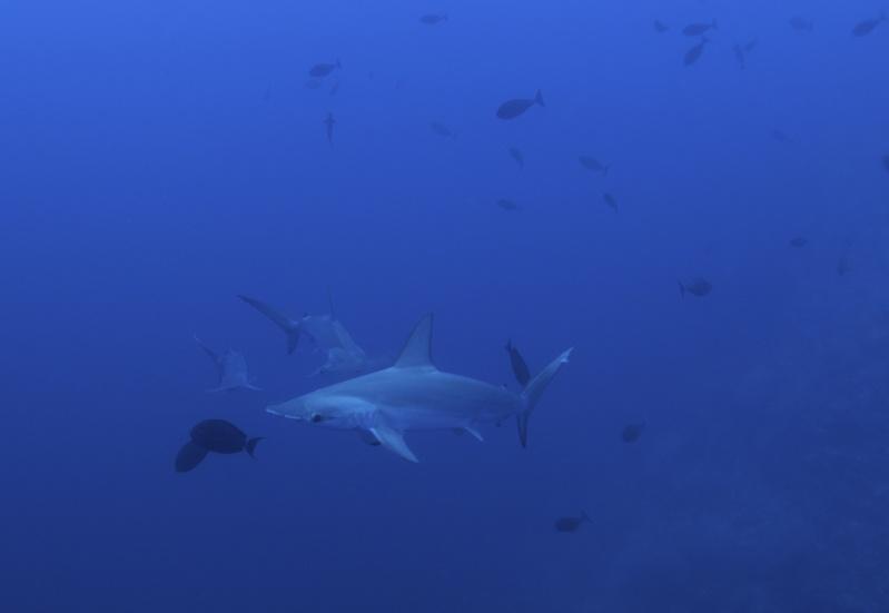 Aventure en mer rouge (Sudan inside) _dsc1412