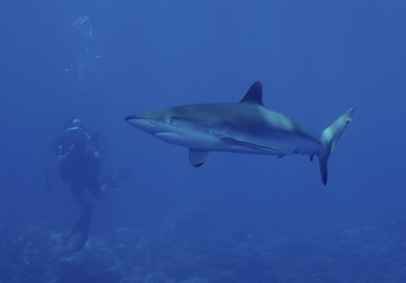 Aventure en mer rouge (Sudan inside) _dsc1413