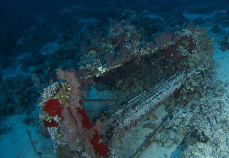 Aventure en mer rouge (Sudan inside) _dsc1612