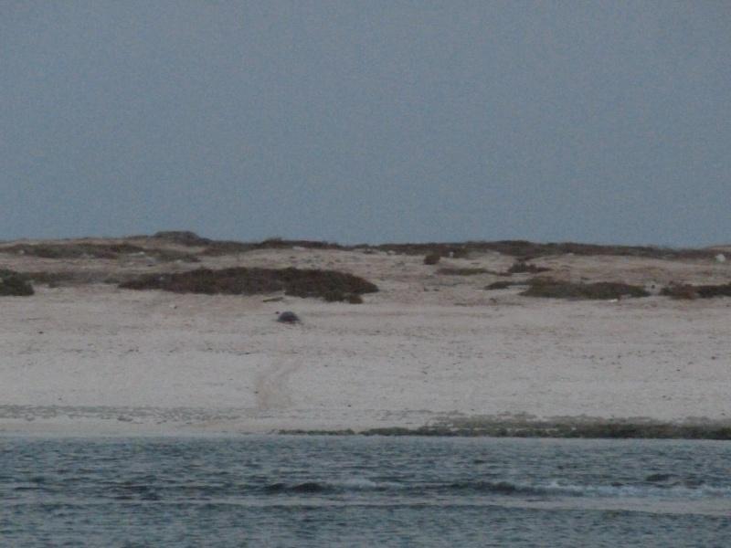 Aventure en mer rouge (Sudan inside) P1020314