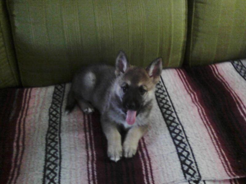 Meet Duke! Cid_0414