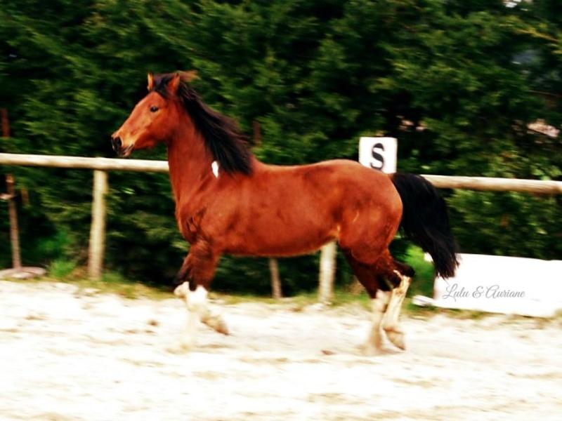 STAR TOUJOURS dite LULU - OC typée Connemara née en 2006 -  adoptée en mars 2011 par  Auriane  - Page 3 10007410