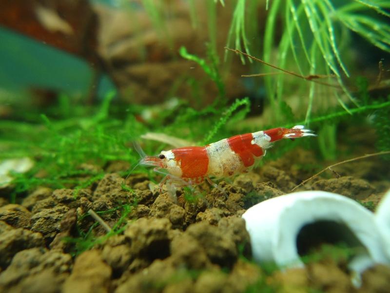 Mes Red crystal et twb Dsc04410