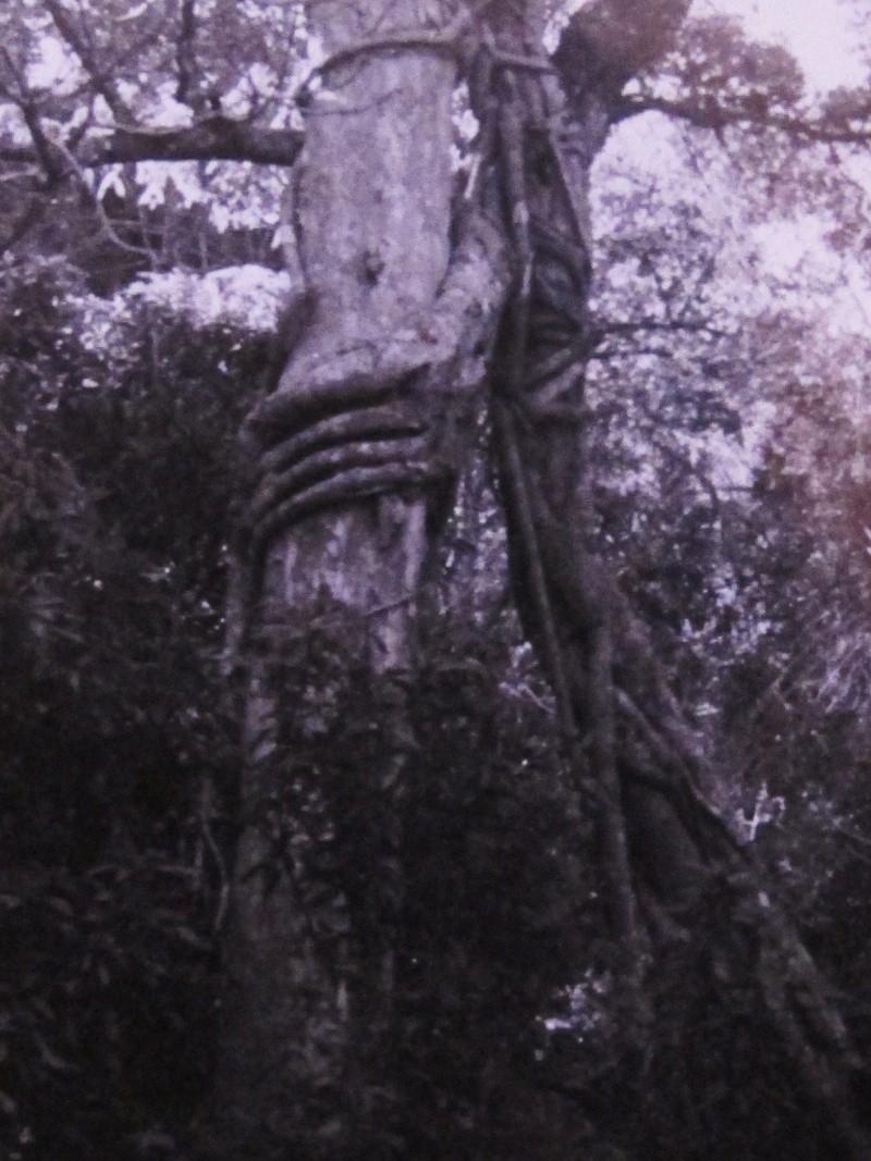 [ARCHIVÉ] [Campagne] DIÉGO SUAREZ - TOME 015 - Page 20 Photos11