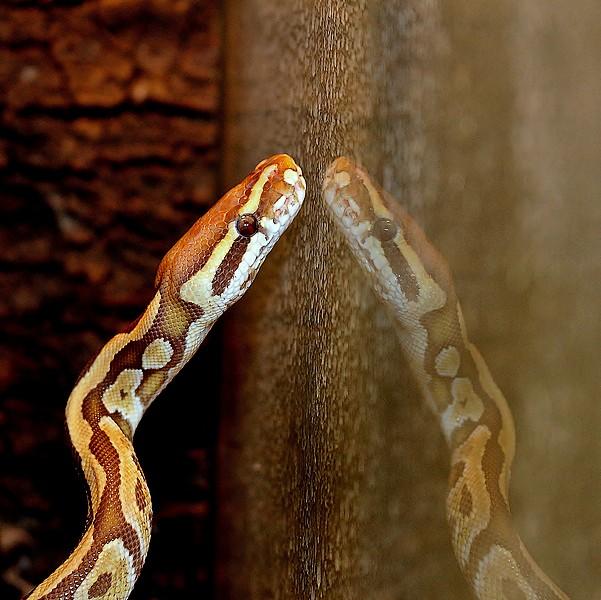 3 petits serpents Img_0214