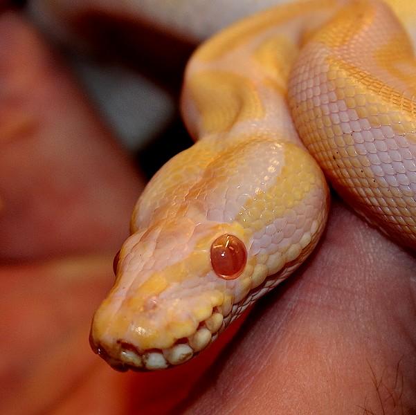 3 petits serpents Img_0215