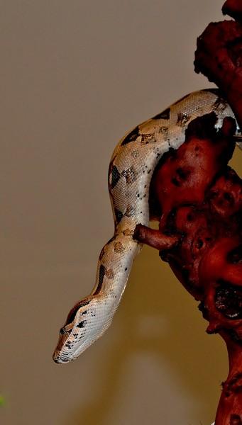 3 petits serpents Img_0216