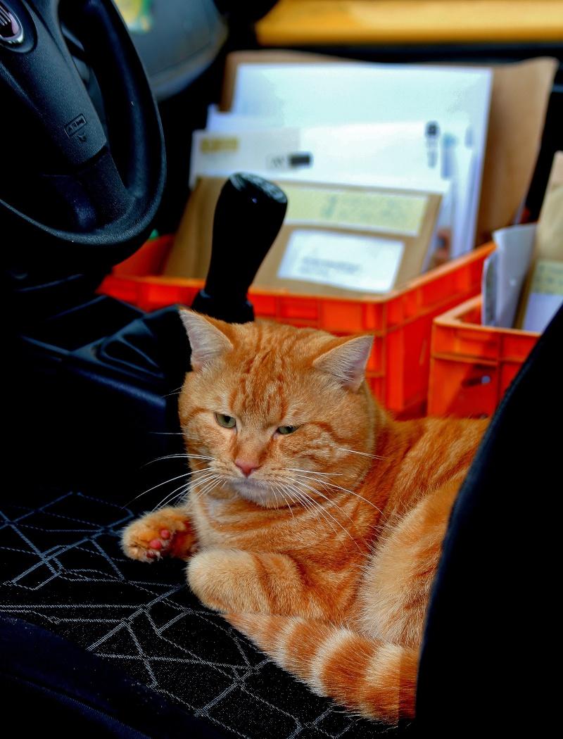 facteur chat Img_2013