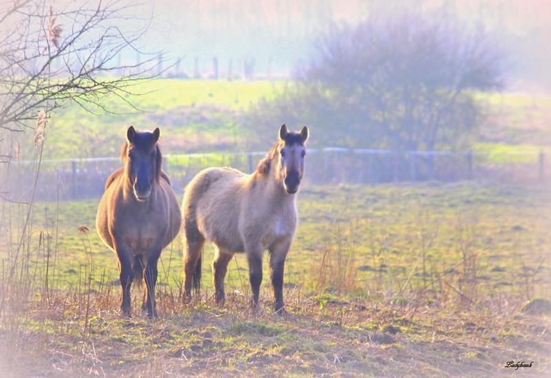 chevaux et pastels Img_3811