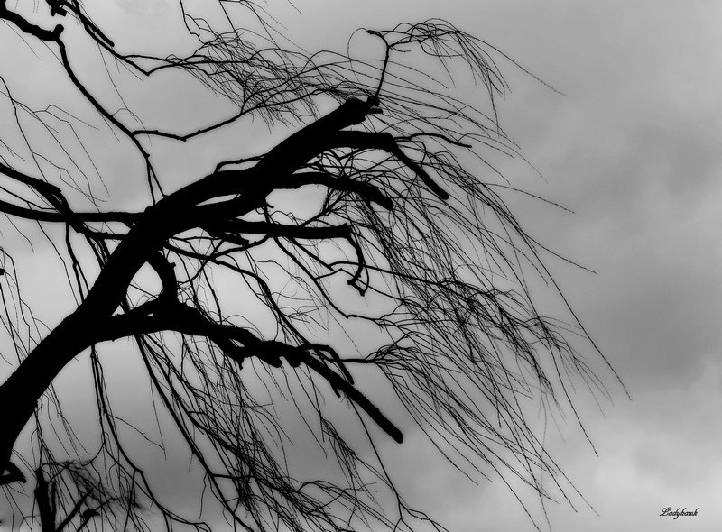le vent Img_4112