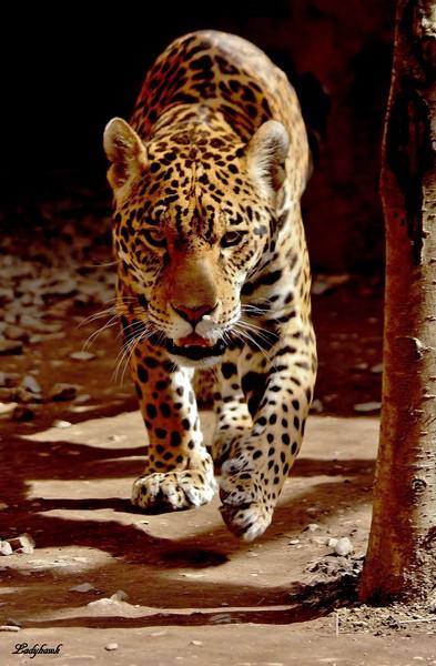 felidae Img_5910