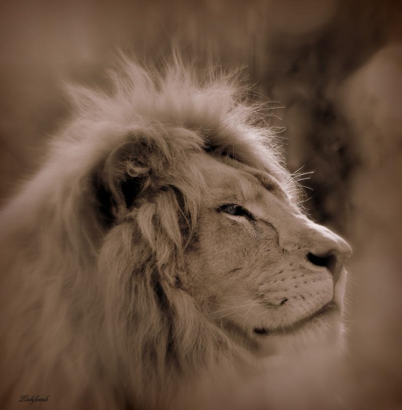 le roi lion Img_6014