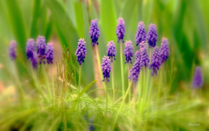 purple Img_6411