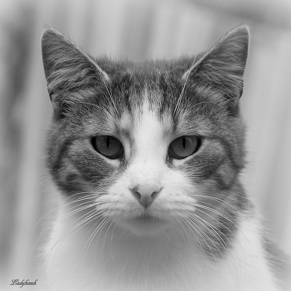 chat des rues Img_7015