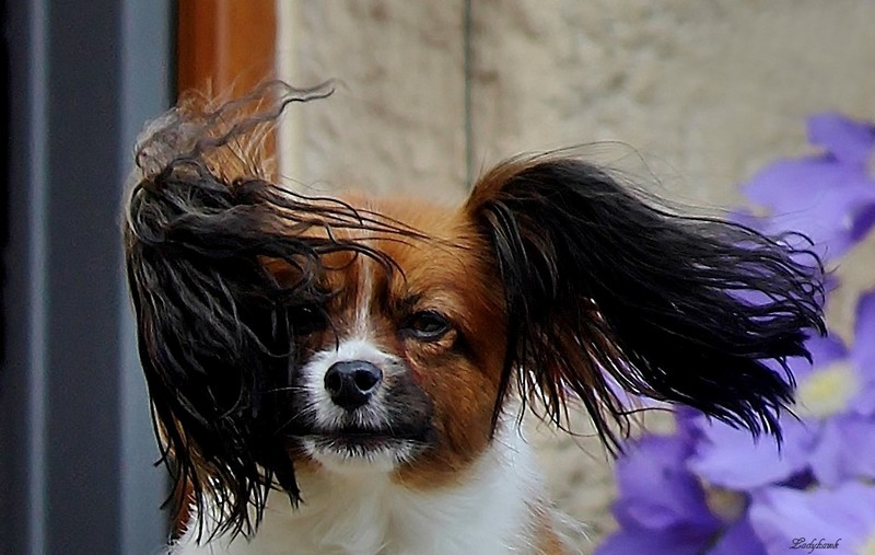 cheveux au vent Img_7311