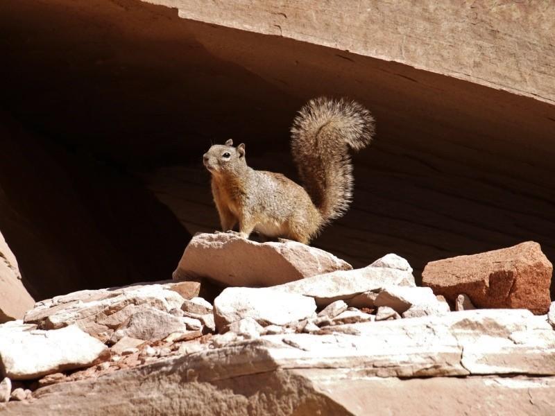 l'ecureuil.. P3123410