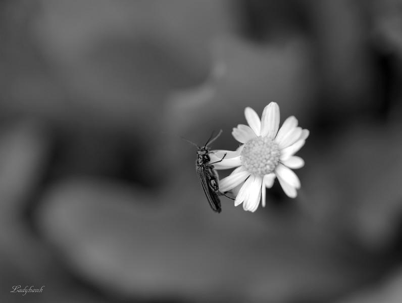 noir et blanc P6237113