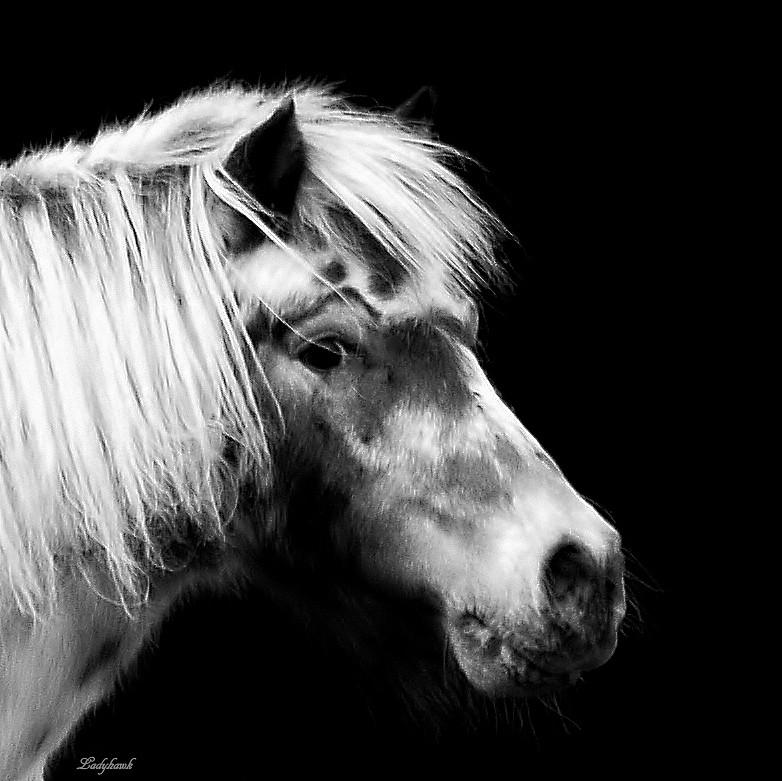 my little pony P9253312