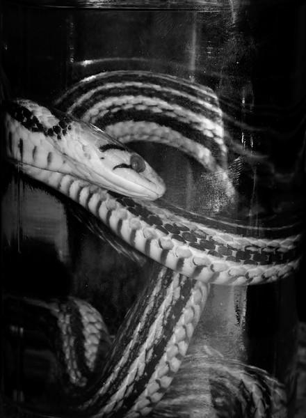 """liqueur de serpent ""  Pa083812"