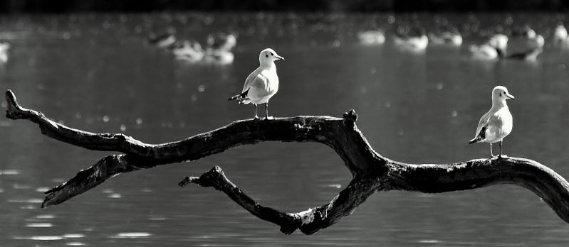 birds Pa218410