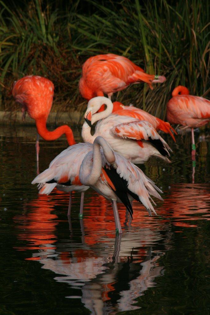 Le parc des oiseaux, Villars-les-Dombes, France !!  13915210