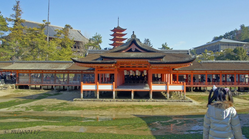 Sanctuaire shinto d'Itsukushima (Itsukushima Shinto Shrine), Miyajima, Hiroshima - Japon  46283110