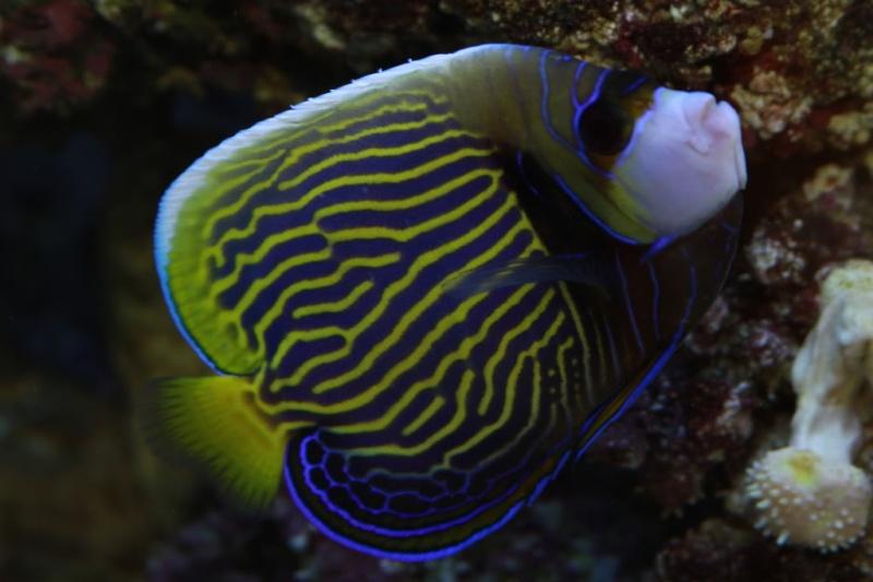 Aquarium FO - Page 2 1yr2mo10