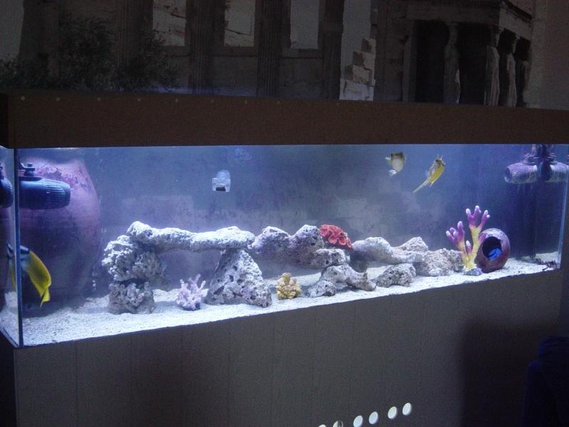 Aquarium FO Dsc03310