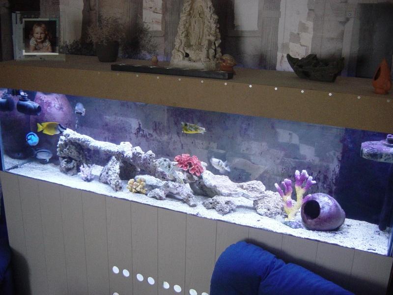 Aquarium FO Dsc03311