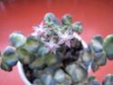 Blüten 2013 - Seite 10 Herbst13