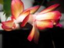 Blüten 2013 - Seite 10 Herbst14