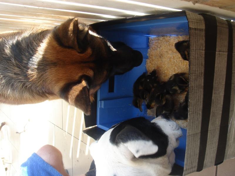 Notre famille cochon d'inde, nouvelles photos 03/02 28929110
