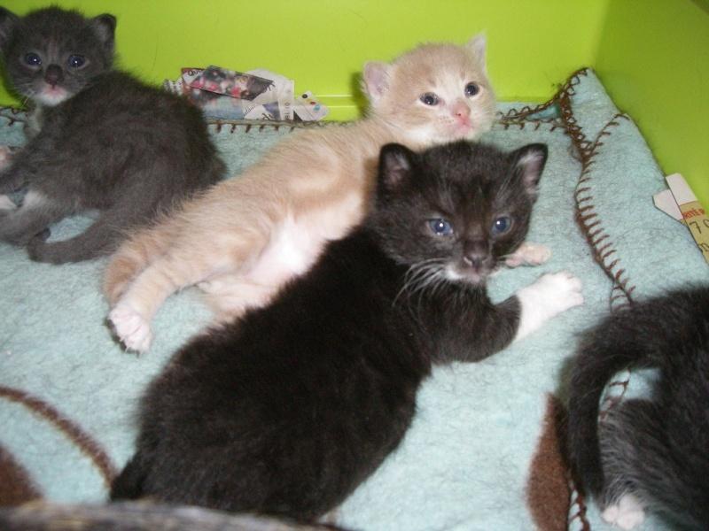 Les chatons sont arrivés .... Imgp3313