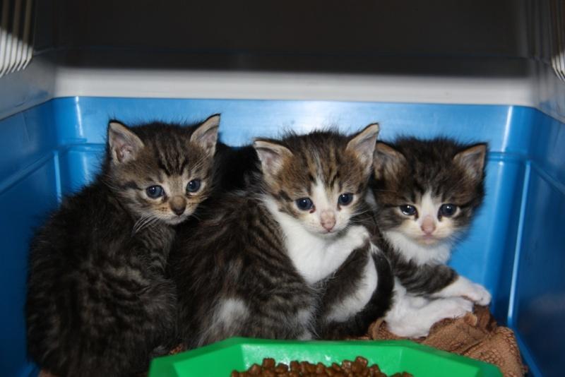 Les chatons sont arrivés .... Trio110