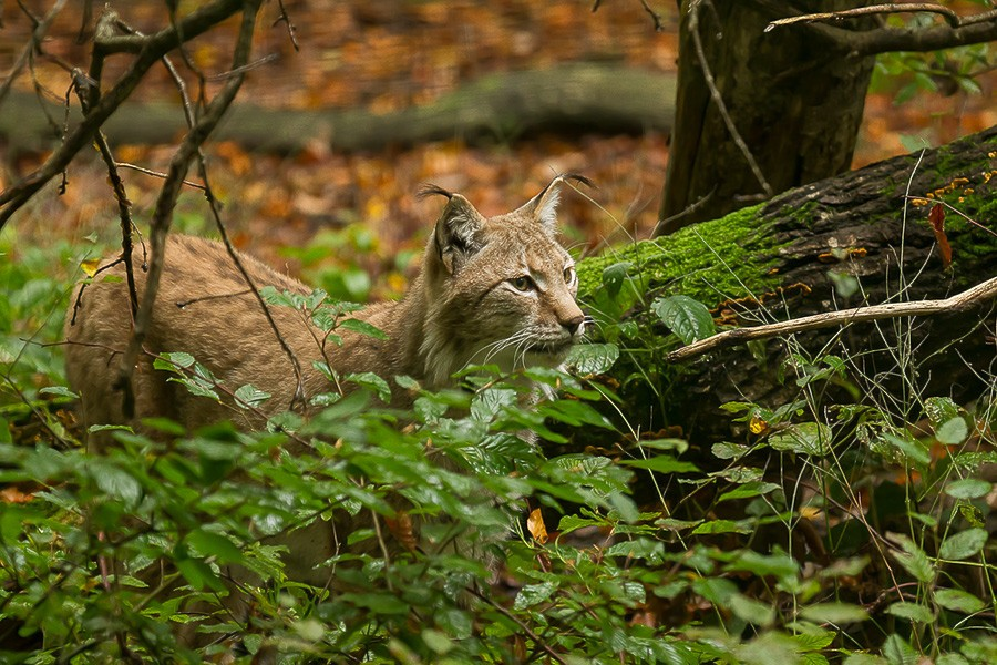 Parc de Ste Croix - 05/10/13 - photos animaux du parc 05102018