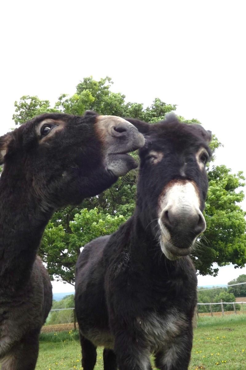 (dpt 71) A ADOPTER, MILAN et ZADIG, ânes communs, en famille d'accueil chez Charly71 - Page 2 Ag_20125