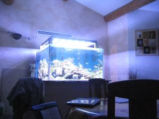 nécrose des coraux Img_2210
