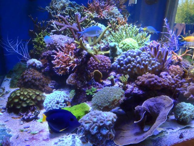 nécrose des coraux Pa091710