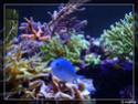 nécrose des coraux Pa061620