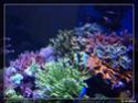 nécrose des coraux Pa061621