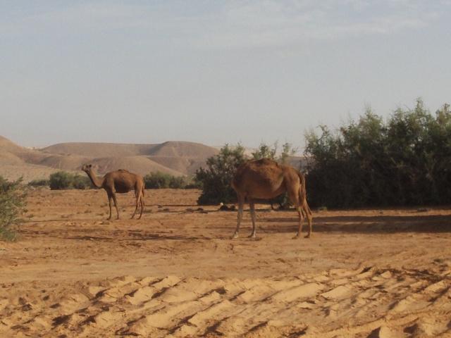 retour Maroc octobre 2013 - Page 3 File0015