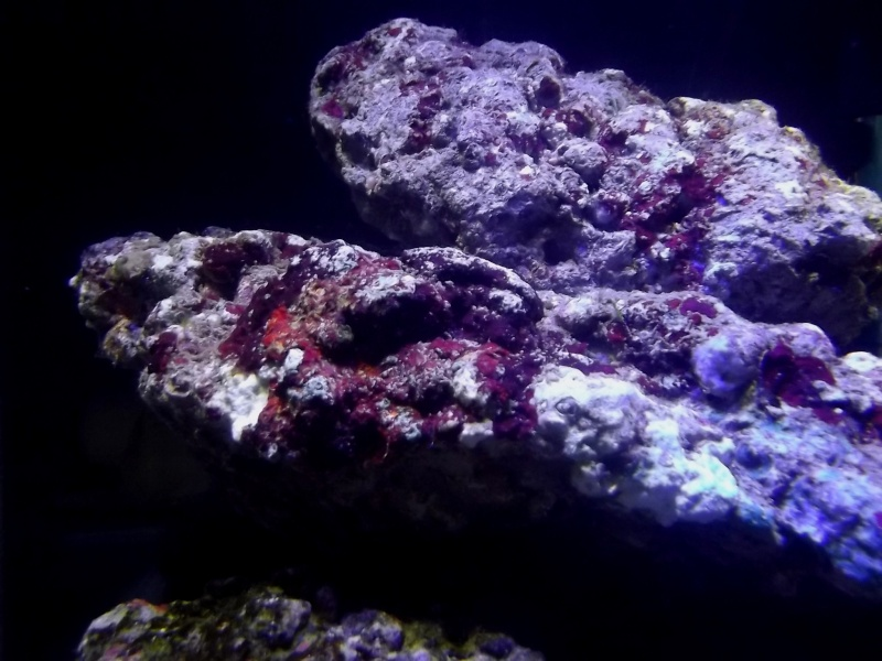 Mon Nano Récif 30 litres - Passage AquaMedic Blenny P.10 Dscf0011