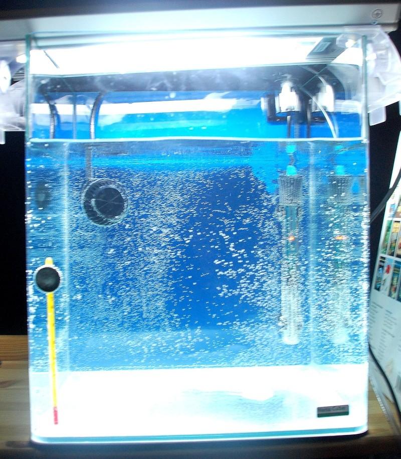 Mon Nano Récif 30 litres - Passage AquaMedic Blenny P.10 F1f10