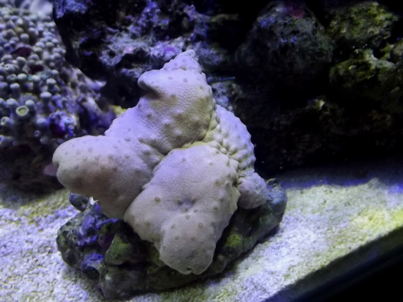 Mon Nano Récif 30 litres - Passage AquaMedic Blenny P.10 - Page 5 F514