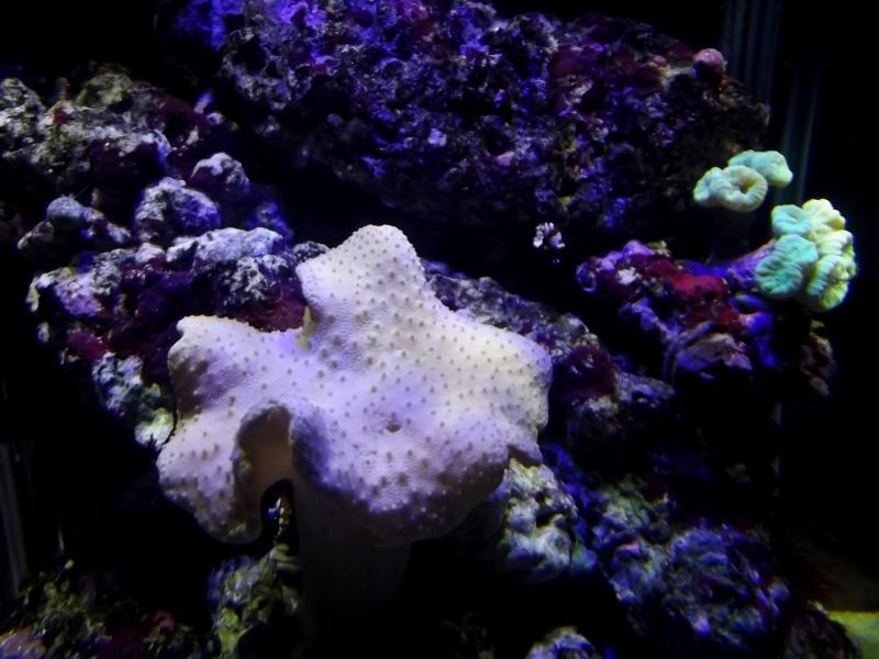 Mon Nano Récif 30 litres - Passage AquaMedic Blenny P.10 - Page 5 F615