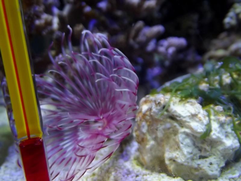Mon Nano Récif 30 litres - Passage AquaMedic Blenny P.10 - Page 5 F911