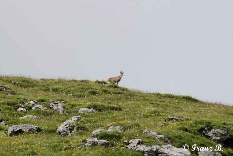 """"""" La haut sur la montagne """" ou, Franz et ses escapades alpines ... Img_0611"""