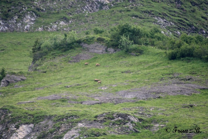 """"""" La haut sur la montagne """" ou, Franz et ses escapades alpines ... Img_0910"""