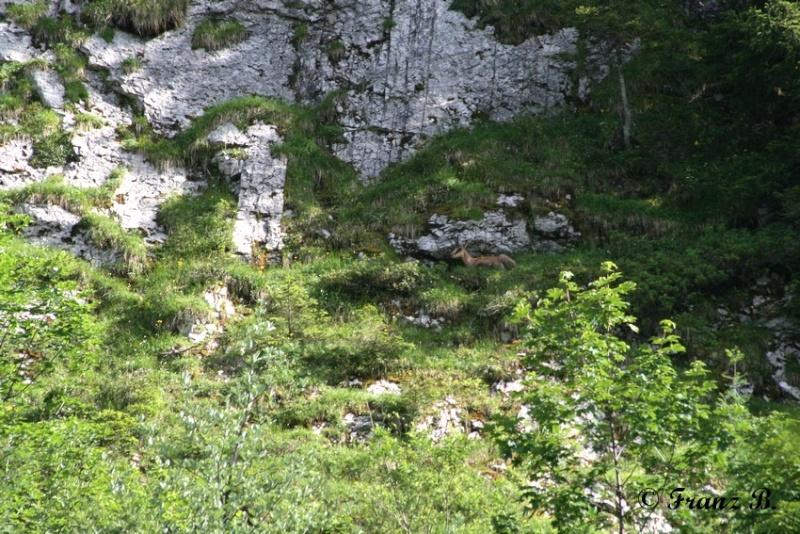 """"""" La haut sur la montagne """" ou, Franz et ses escapades alpines ... Img_1010"""